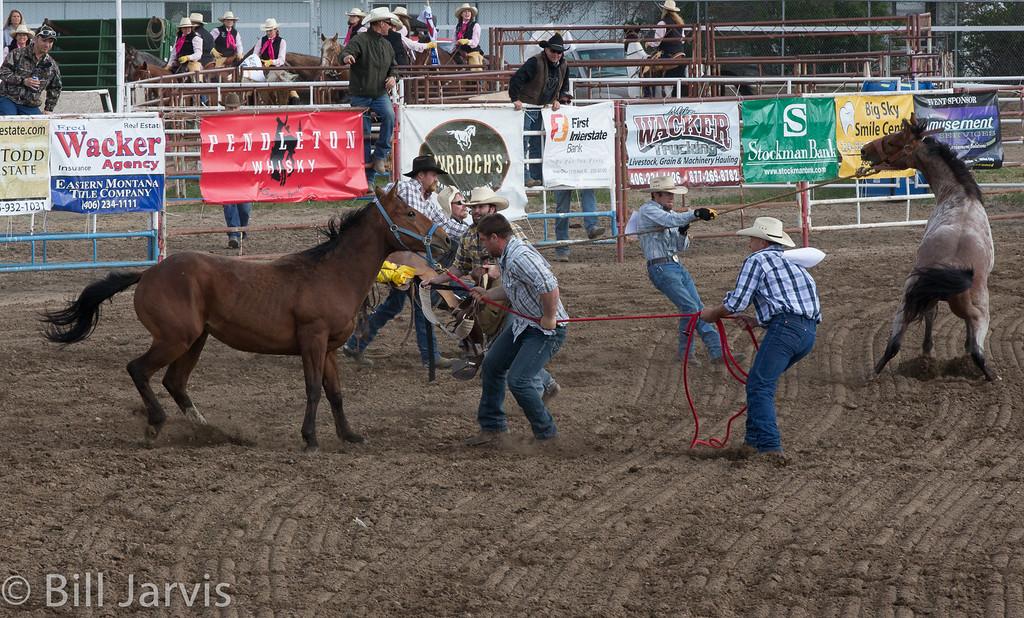 Wild Horse Race