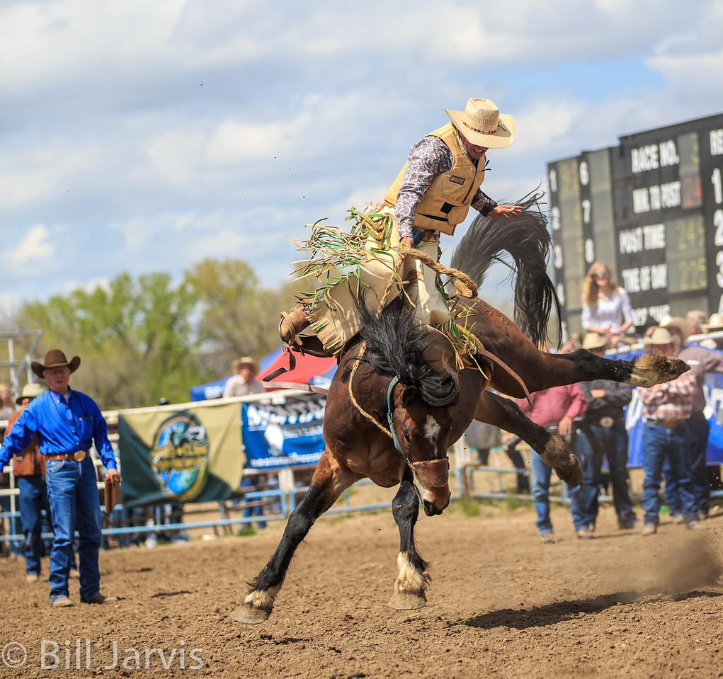 The best bucking horses you'll see