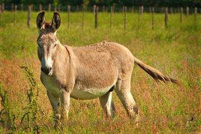 Donkey0002