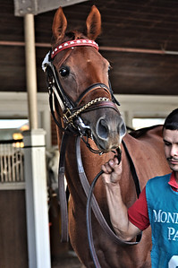 This racehorse also happens to be my animal soulmate, Mini Moneigh. Never before have I connected with an animal as I have with her. The following photos are from her debut race in October 2012.