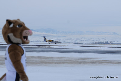 The plane has landed: Montana State mascot Champ at Gallatin Field airport in Belgrade Montana with the new Horizon Air MSU Bobcat plane