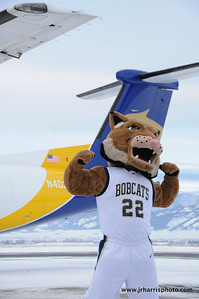 Montana State mascot Champ flexing his muscles at Gallatin Field airport in Belgrade Montana with the new Horizon Air MSU Bobcat plane