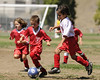 Montclair Soccer Club's U6 on opening day of the Fall 2008 season.