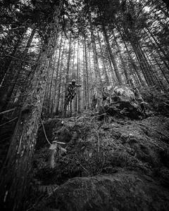 Hanley Spring Forest Stepdown