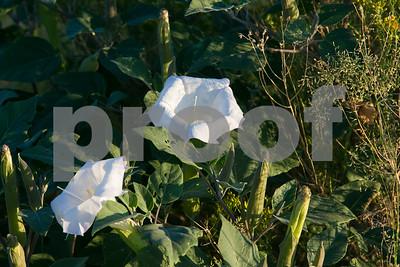 09/16/18_MtGrahamStateHillClimb_KathleenDreierPhotography