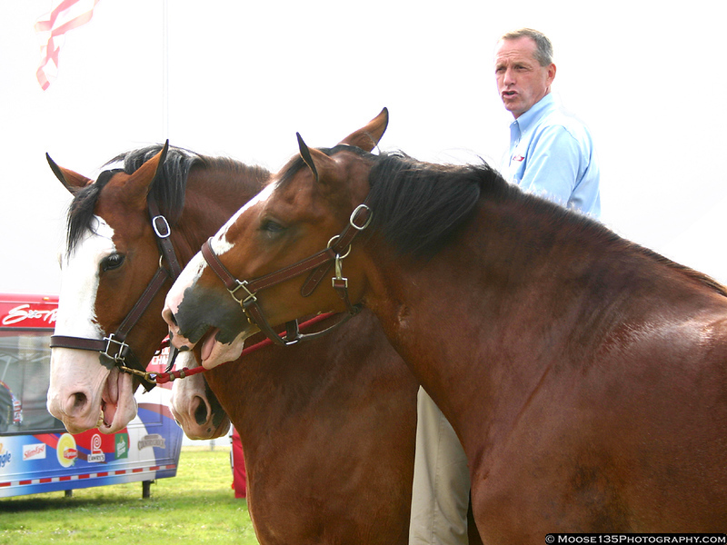 The world-famous Budweiser Clydesdales made a visit to Pocono for the July race.