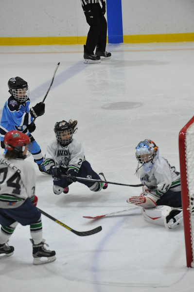 Whalers Tournament 2016_0513
