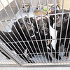 Three puppies share a kennel on Tuesday at the Joplin Humane Society. The JHS is in need of foster families for dogs and cats as their population increases.<br /> Globe | Laurie Sisk