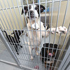 Three puppies share a kennel on Tuesday at the Joplin Humane Society. The JHS is in need of foster families for dogs and cats as their population incrases.<br /> Globe | Laurie Sisk