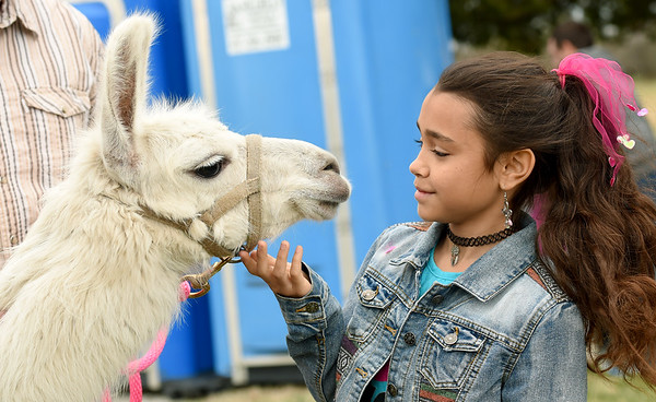 """Ten-year-old Karmyn Page gets acquainted with """"Snow,"""" a 1-year-old llama on Saturday at a petting zoo at Bykota Church during their Easter Egg hunt.<br /> Globe 