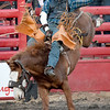 Rusty Stewart, of Stella, tries to stay on his horse during the bronc riding competition at Rodeo Miami on Saturday at the Miami Fairgrounds.<br /> Globe | Laurie Sisk