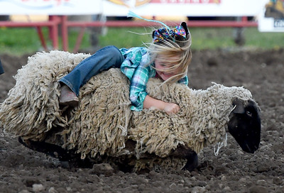 Six-year-old Carolina Land, of Wyandotte, holds on to her sheep during the mutton busting competition at Rodeo Miami on Saturday at the Miami Fairgrounds. Globe | Laurie Sisk