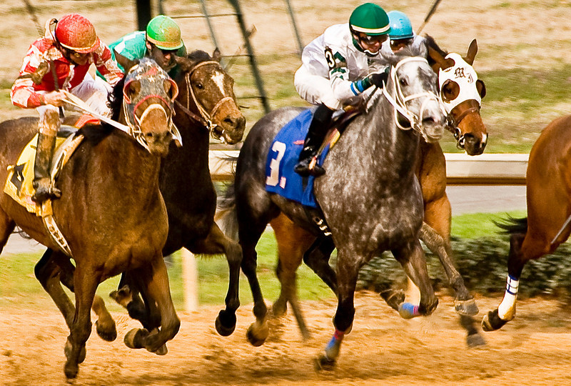 On the final stretch of the fifth race, America's Blossom (on left, #4 on yellow blanket) takes to the outside to challenge the pack.  Notice the mud on the horses and jockeys.  Can America's Blossom pull it off?