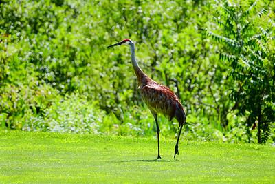 Olivet Golf Outing-60