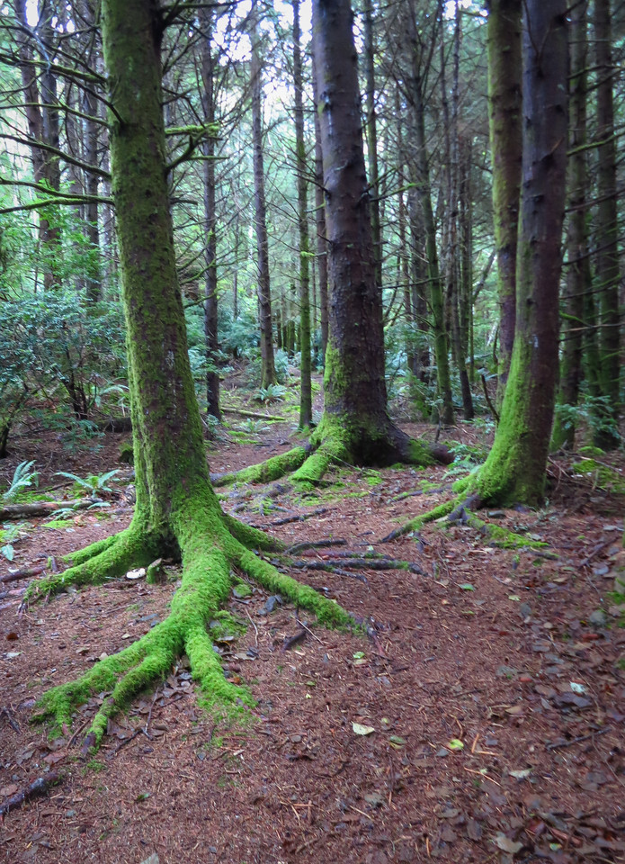 Moss and trees line the trail.