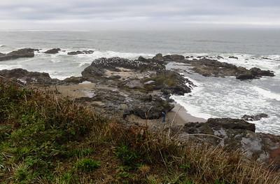 Gulls on the rocks.
