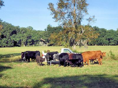 Cow Pasture 2