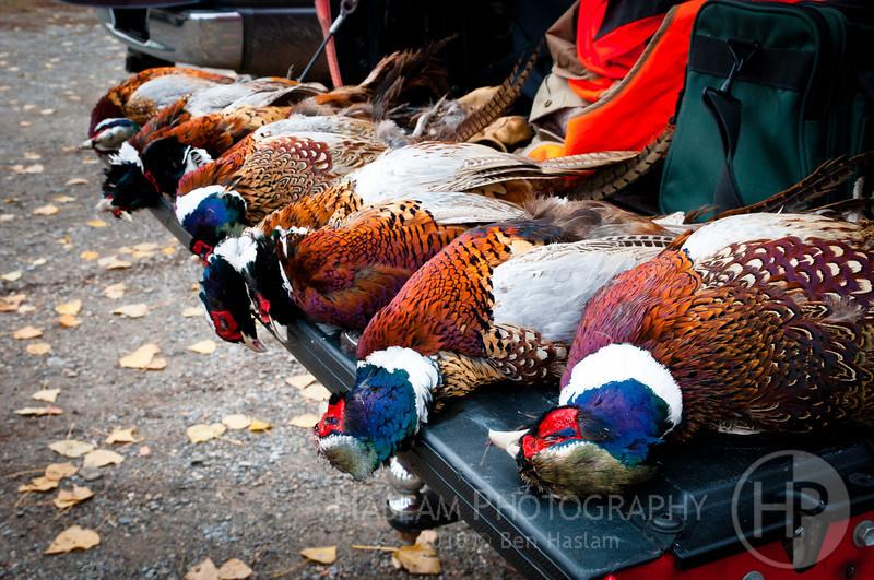 20101111 Pheasant Hunt 1