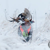 20111118 Pheasant Hunt 27