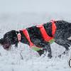 20111118 Pheasant Hunt 10