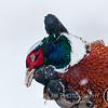 20111118 Pheasant Hunt 37