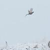 20111118 Pheasant Hunt 20