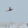 20111118 Pheasant Hunt 18