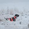 20111118 Pheasant Hunt 13