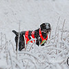 20111118 Pheasant Hunt 41