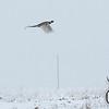 20111118 Pheasant Hunt 19