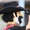 Globe/T. Rob Brown<br /> Joplin Outlaws mascot Angus tips his hat during a recent game at Joe Becker Stadium.