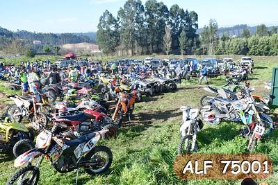 ALF 75001