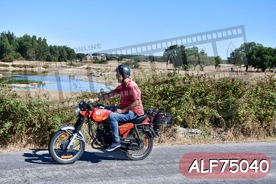 ALF75040