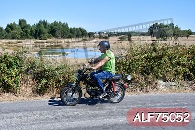 ALF75052