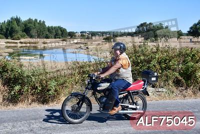 ALF75045