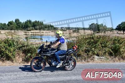 ALF75048
