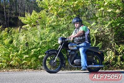 ALF75057