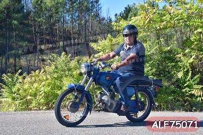 ALF75071