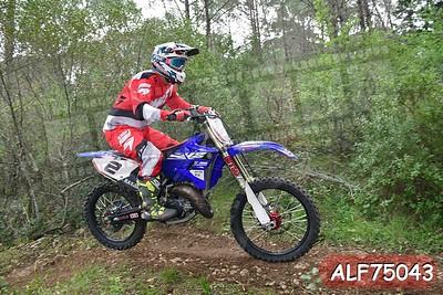 ALF75043