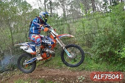 ALF75041