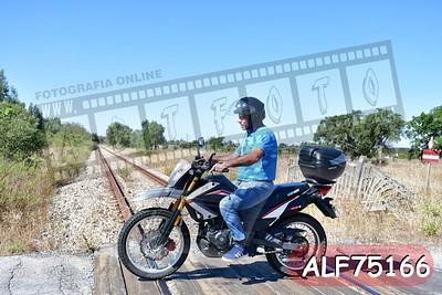 ALF75166