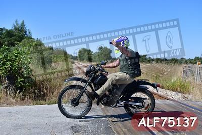 ALF75137