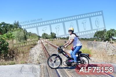ALF75158