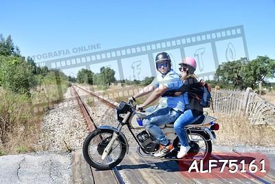 ALF75161