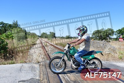 ALF75147
