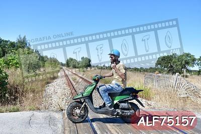 ALF75157