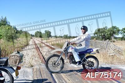 ALF75174