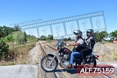 ALF75159