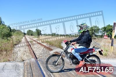 ALF75165