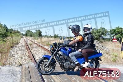 ALF75162